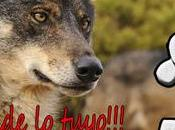 Salamanca exenta lobos
