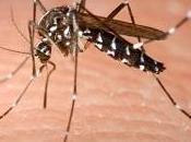 Infección virus Zika