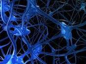 ¿Qué significa soñar neuronas?