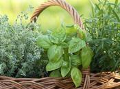 Plantas para repeler Moscas