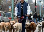 ¿Qué paseador perros? Aspectos Importantes Para Conocerlo