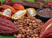 cacao chocolate Materias primas