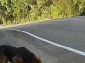 """""""Los perros camino Calbuco"""""""