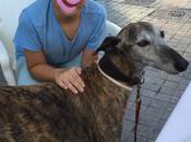 Mascotas bienvenidas establecimientos Petfriendly