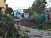 Fuertes vientos derriban árboles postes Luis Potosí
