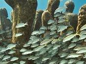 primer museo submarino encuentra Lanzarote