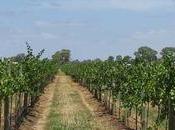 Gestionar viñedo desde Smartphone