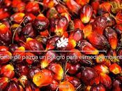 Aceite palma, peligro para salud medio ambiente