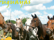 Guía Fiestas Uruguayas 2016 Todo año, Departamentos