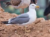 OBSERVANDO AVES NAVARRA ESPAÑA-Birding NAVARRE SPAIN