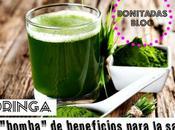 Moringa, Bomba Beneficios Para Salud