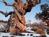 árboles viejos mundo.