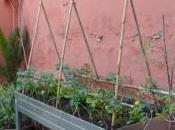 iniciación cultivo urbano.