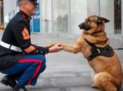 Lucca, perro perdió pata recibió medalla valor.
