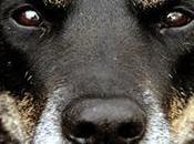 mejores alimentos para perros senior