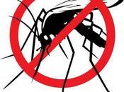 Einsectos: defensa natural contra mosquitos!