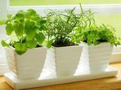 Plantas Interior Mantenimiento