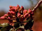 Nuevo proyecto ESLA: Planta procesado pistacho