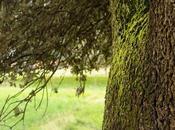 Quercus Ilex hablara…