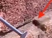 Super abeja arregla para sacar clavo pared ladrillos
