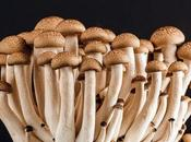Droga derivada hongos podría servir para tratar depresión