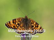Macro 2016 mariposas