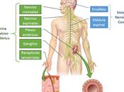 Sistema Nervioso aspectos generales