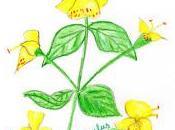 Flores Bach: Mimulus