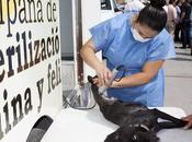 Ayuntamiento realiza campaña esterilización para mascotas