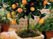 Prueba cultivar árboles frutales casa