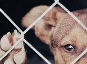 Ayuntamiento sancionará maltrato animal