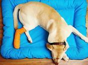 Fracturas Perros Tipos, Cuidados Tratamientos