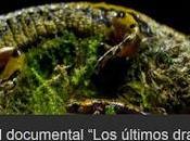 Proyección documental salamandras Oviedo exposición anfibios reptiles
