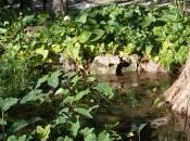 Agua verano