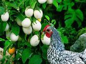 planta pone huevos?!