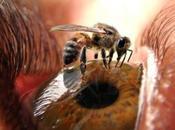 abejas: Cuando nosotros vamos, ellas vuelven