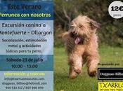 Beneficios para perro excursiones caninas grupo