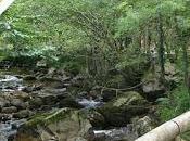 Senderismo Ruta Alba: Descubriendo Parque Natural Redes Trasgu Fronda