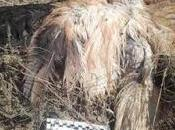 Grave caso envenenamiento fauna amenazada Torralba Aragón