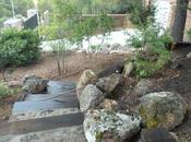 Mezcla sustratos para plantar Acer palmatum (Arce japonés)
