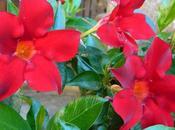 Ruta Camelia: jardín Saleta verano 2016. Camellia Route: Saleta's Garden summer,