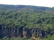 Buitreras cañón Jarama