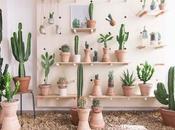 gusta decorar cactus suculentas? pierdas esta concept store