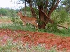 Excursiones safaris desde Nairobi