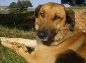 SUNCO, ABANDONADO buscado perrera.