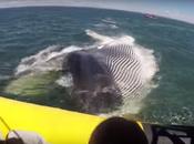 ¡Una foca sube bote para salvarse unas orcas iban comer!
