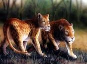 marozi, ¿león moteado montaña?