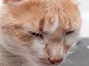 Cuando gato llora lágrimas reales