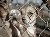 Buscan perseguir oficio maltrato animal
