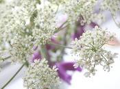 nueva inquietud botánica
